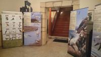 A Biblioteca Municipal de Ribadeo acolle ata o 3 de febreiro unha exposición didáctica de aves do Centro de Extensión Universitaria e Difusión Ambiental de Galicia.