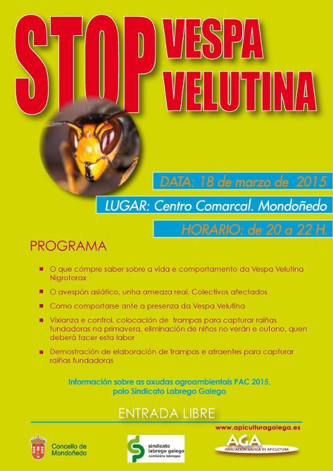 O 18 de marzo haberá en Mondoñedo unha charla sobre a vespa velutina. Será no Centro Comarcal.